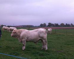 Ferme de la Flatterie – Seignelay - L'élevage